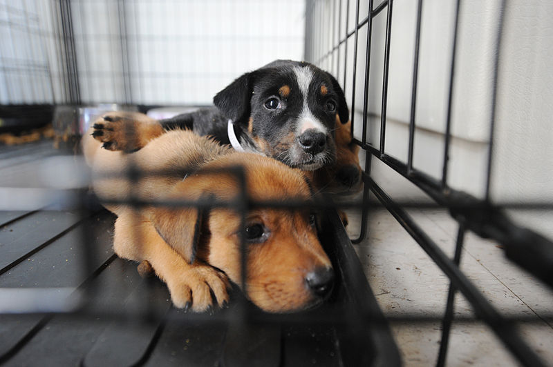 CRIST REINTRODUCES BIPARTISAN BILL PROTECTING AGAINST ANIMAL ABUSE